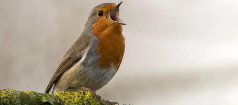 App van de week: BirdNET