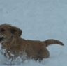 fauvehound
