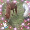 Paardenfan