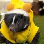 Skunkie