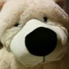 UC Bear