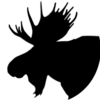 Bigmoose