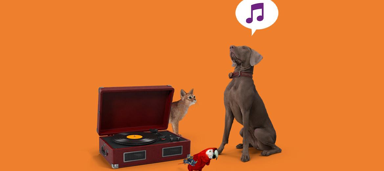 Tele2 Blog: Muziek voor je huisdier