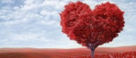 Le pire de la Saint-Valentin pour les Officiels VOO